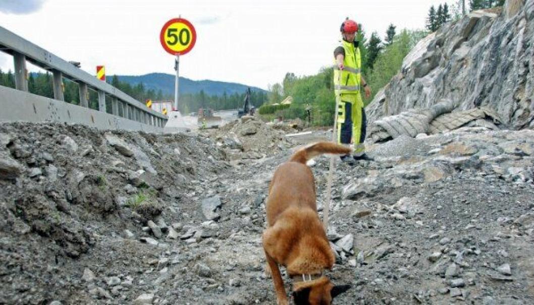 Den belgiske fårehunden, Asti, og hundefører Andreas Nilsen, arbeidet seg raskt og effektivt gjennom området som skulle undersøkes ved E16 i Valdres.