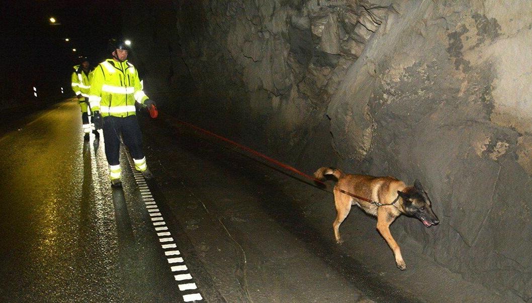 Sprengstoffhund fra FFI i aksjon i Røyrdalstunnelen.