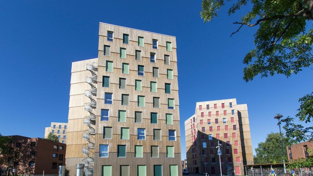 Moholt 50|50, Trondheims nyeste studentby, har Kebony-kledning.