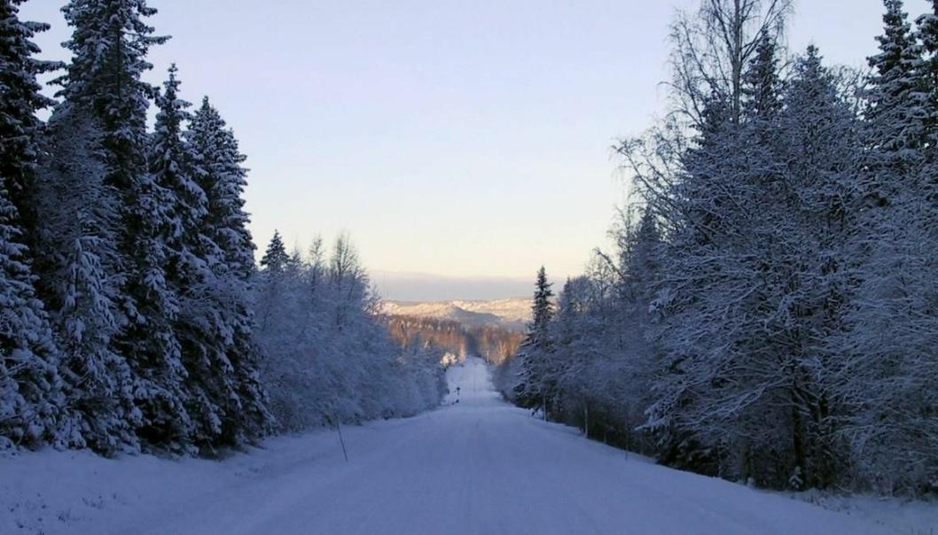 Illustrasjonsbilde av vintervei nord i Sverige.