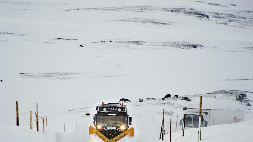 Velger Hardangervidda for tungtransporten.