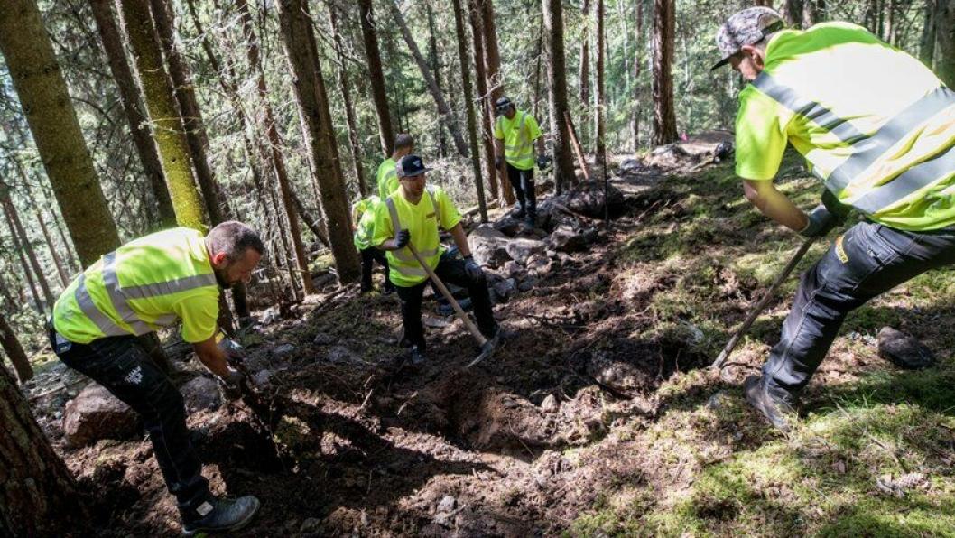 Bærekraftig er et viktig stikkord når stibyggerne er ute i skogen og bygger sykkelstier med håndkraft.