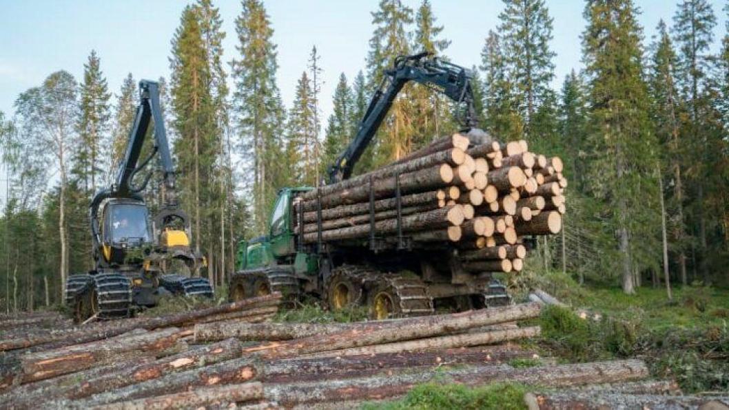 Statskog er landets største skogeier med totalt 4,6 millioner dekar produktiv skog fordelt over store deler av landet.