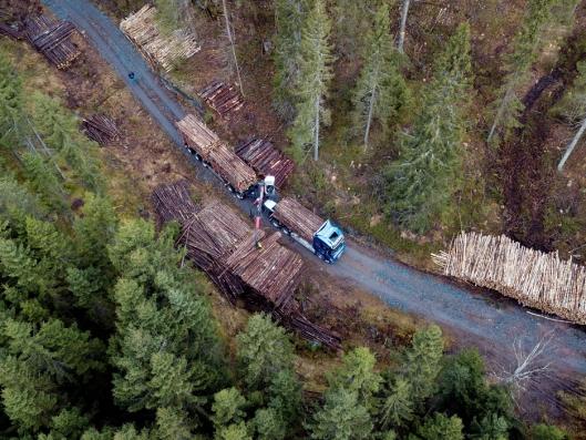 ALENE: Langt inne i skogen er det ingen som forstyrrer Kristin Leithe når hun laster tømmerbilen.