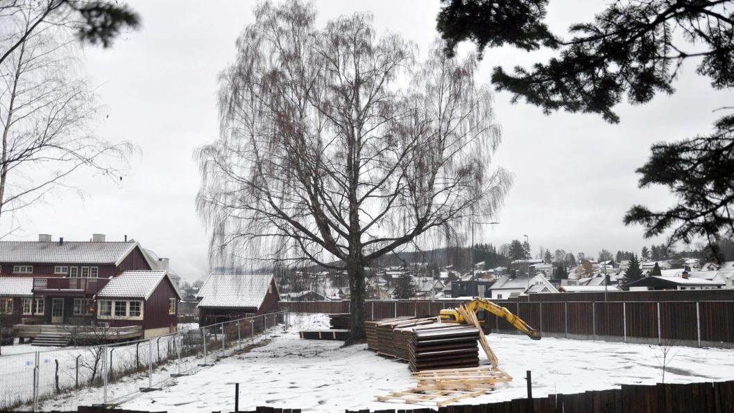 Hus og frukttrær måtte vike, men bjørka fikk stå da ny vei ble bygget.