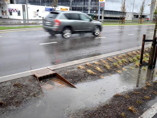 Kjeftsluk har en viktig funksjon for regnbedene i Drammen.