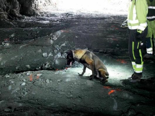Hunder har markert ti steder med eksplosivrester under arbeidet.