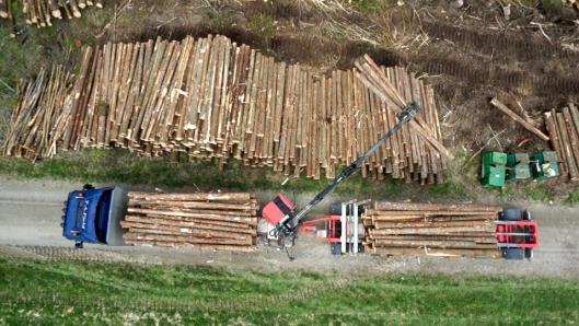Transportselskapet Nord AS koordinerer transport av 1,3 millioner kubikk med tømmer årlig.