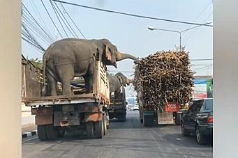 Når lasten stjeler lasten i nabolastebilen