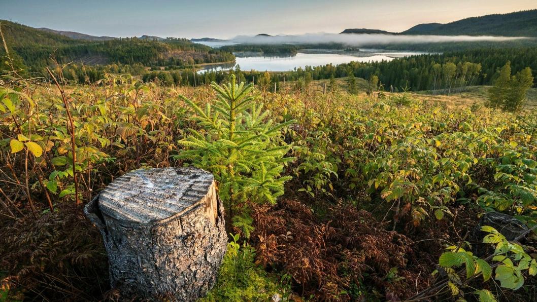 Regelendring og ekstra tilskudd skal gi skogplanting også våren 2020.