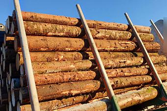 Tømmertransport endte med anmeldelse og gebyr på 50.750 kroner