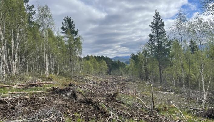 Skogrydding for landbruksveien som skal gå parallelt med ny E39, nord for nyveien.